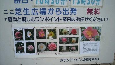 gokigen01291.jpg