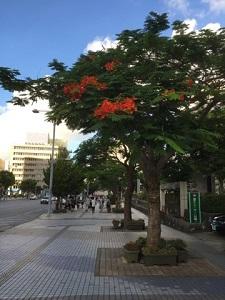 okinawa073120.jpg