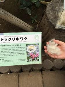 okinawa112713.jpg