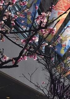 okinawa022612.jpg