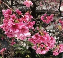 okinawa030517.jpg