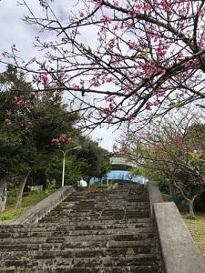 okinawa03054.jpg