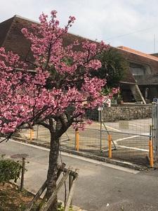 okinawa03057.jpg
