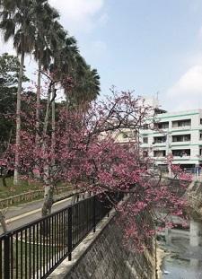okinawa03058.jpg
