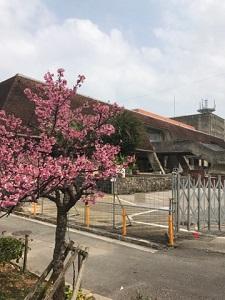 okinawa03125.jpg