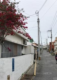 okinawa03264.jpg