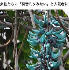 okinawa04089.jpg