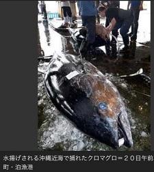 okinawa04294.jpg