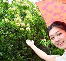 okinawa06025.jpg