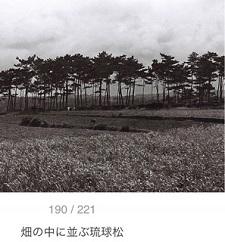 okinawa06179.jpg