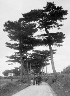 okinawa09105.jpg