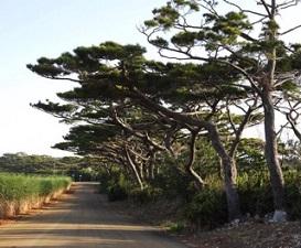 okinawa09235.jpg