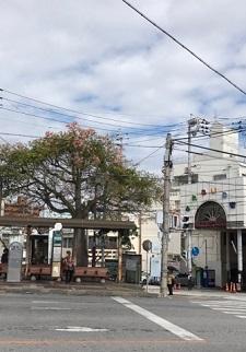 okinawa12303.jpg