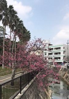 okinawa021723.jpg