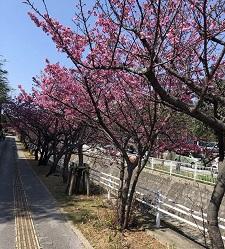 okinawa022410.jpg