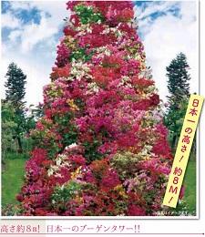 okinawa02249.jpg
