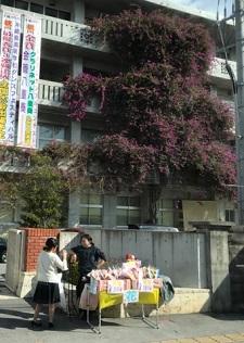 okinawa03104.jpg