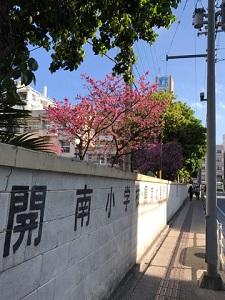 okinawa031061.jpg