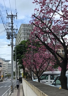 okinawa03109.jpg
