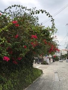 okinawa03179.jpg