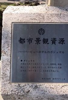 okinawa08175.jpg