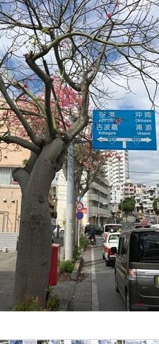 okinawa10197.jpg
