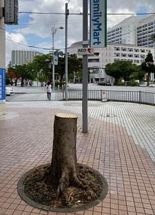okinawa111612.jpg