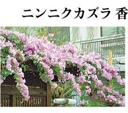okinawa11297.jpg