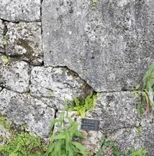 okinawa120718.jpg