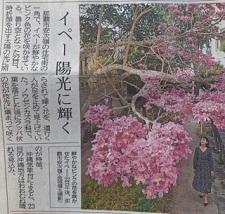 okinawa022927.jpg