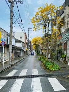 okinawa031419.jpg