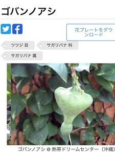 okinawa062023.jpg