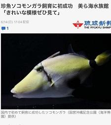 okinawa08088.jpg