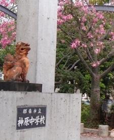 okinawa103111.jpg