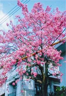 okinawa103117.jpg