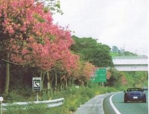okinawa10319.jpg