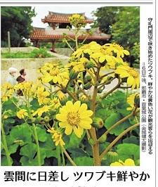 okinawa12192.jpg