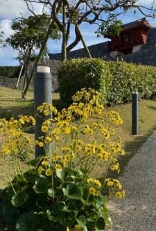 okinawa12193.jpg