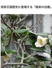 okinawa013022.jpg