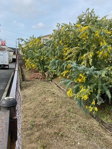 okinawa031322.jpg