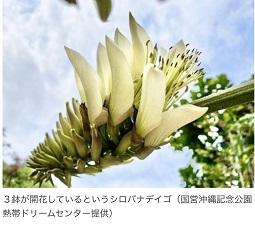 okinawa032725.jpg