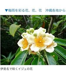 okinawa05294.jpg