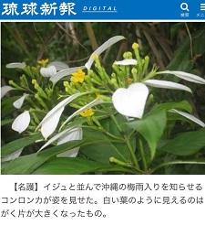 okinawa05295.jpg