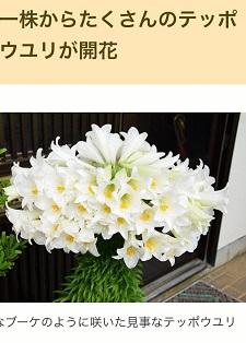 okinawa061217.jpg